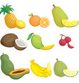 tropical fruits icons vector image