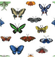 sketch a butterfly vector image vector image