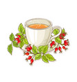 wild rose tea vector image vector image
