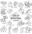 Collection of garden and wild berries in sketch vector image