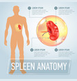 infographic poster with spleen and vector image vector image
