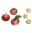 set of different apples isolated on white vector image