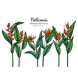 bird paradise heliconia flower and leaf vector image