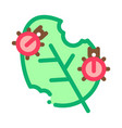 bugs eat leaf icon outline vector image