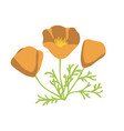 california poppy vector image vector image