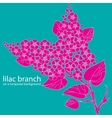 lilac branch vector image