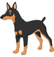 cartoon dog miniature pincher vector image vector image