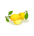 two whole lemons with green leaves and small slice vector image
