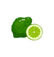cartoon fresh bergamot isolated on white vector image vector image