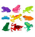 flat set of cartoon frogs toads with short vector image vector image