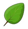green leaf symbol icon design vector image