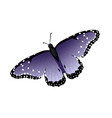 multicolor realistic isolated butterfly vector image