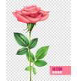 Rose And Petals Transparent Set vector image
