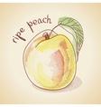 vintage peach vector image vector image
