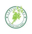 vintage retro green celery parsley vegetable logo vector image vector image