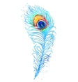 Watercolor peacock feather vector image