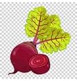 Beet isolated organic food farm food vector image
