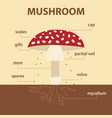 diagram showing parts of mushroom whole plant vector image