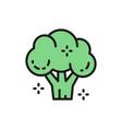 broccoli vegetable healthy food flat color line vector image