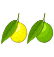 lemon and lime colored hand drawn sketch vector image vector image