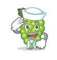 sailor green grapes character cartoon vector image vector image