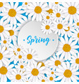 spring greeting card with blooming chamomile vector image