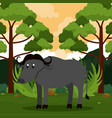 buffalo safari animal vector image vector image