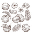 coconut sketch drawing nature hand drawn half vector image