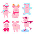 new year s set of cute pigs characters santa vector image vector image