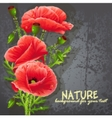Background for your text with red poppies vector image