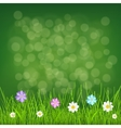 Background with grass and flowers vector image vector image