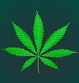 cannabis marijuana realistic vector image vector image