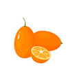 cartoon fresh kumquat isolated on white background vector image vector image