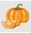 Pumpkin isolated organic food farm food vector image
