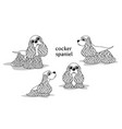 cocker spaniel vector image