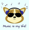 dog corgi musician listening to music in blue vector image