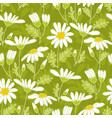 chamomile hand drawn color seamless pattern vector image vector image