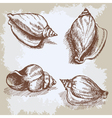 Seashells hand drawn graphic vintage etching vector image vector image