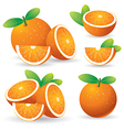 oranges with leaves set vector image