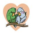 cartoon parrots in love vector image vector image