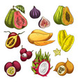 exotic fruit tropical farm product sketch set vector image vector image