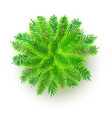 green palm tree 3d isolated vector image