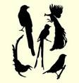peacock hummingbirds silhouette vector image
