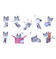 kitty set house domestic cats vector image