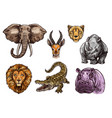 african animal sketch set of elephant lion hippo vector image vector image