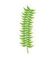 branch foliage leaves white background vector image