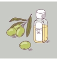 Olive oil in bottle with branch close up Doodle vector image vector image