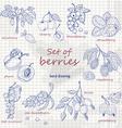Set of garden berries on paper vector image vector image