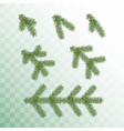 conifer branches set green branches vector image