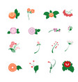 floral pattern decor element set ornamental vector image vector image